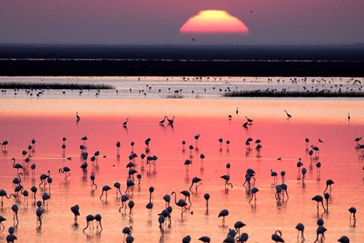 Flamants roses du parc national de Doñana, à côté de Lince Casa Rural
